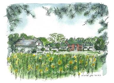 Huntingfield Creek Sunflowers  ©  2012